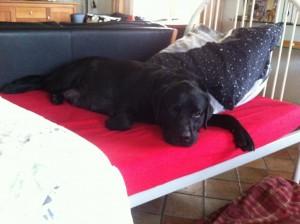 Donya ontdekt al snel de luxe van IN een bed liggen ipv ERONDER.