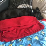 de pups met kruik onder de deken